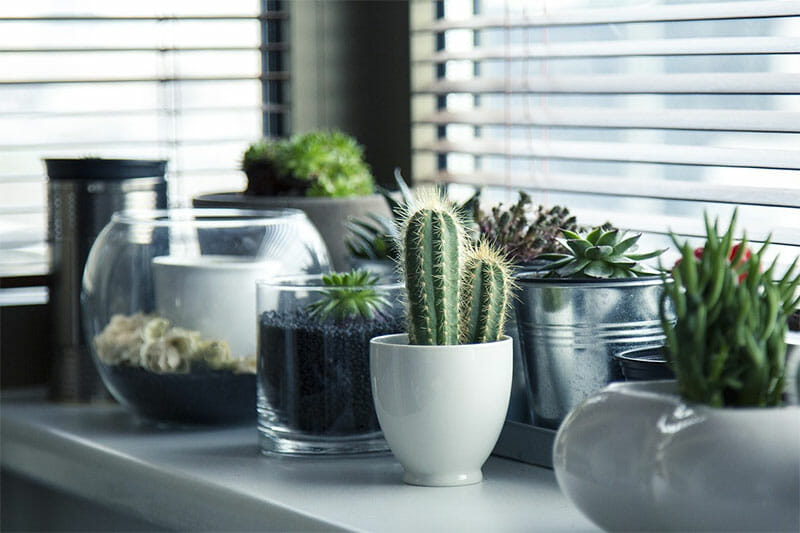 cacti next to a window