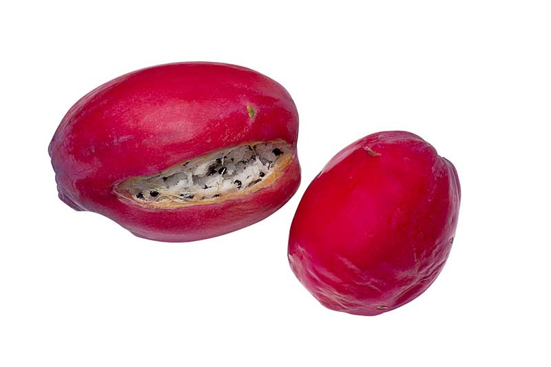 Peruvian apple cactus fruit