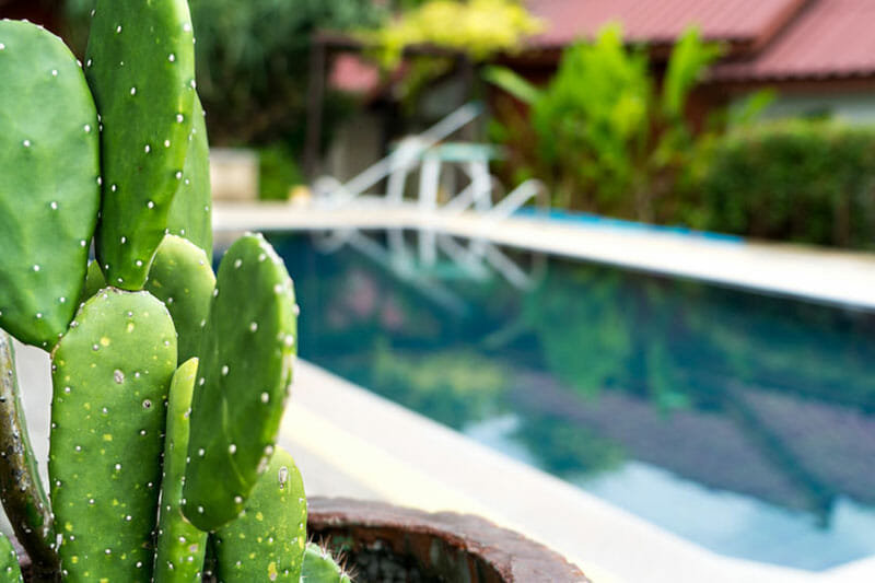 Can A Cactus Really Absorb Radiation? (The Truth) - CactusCare
