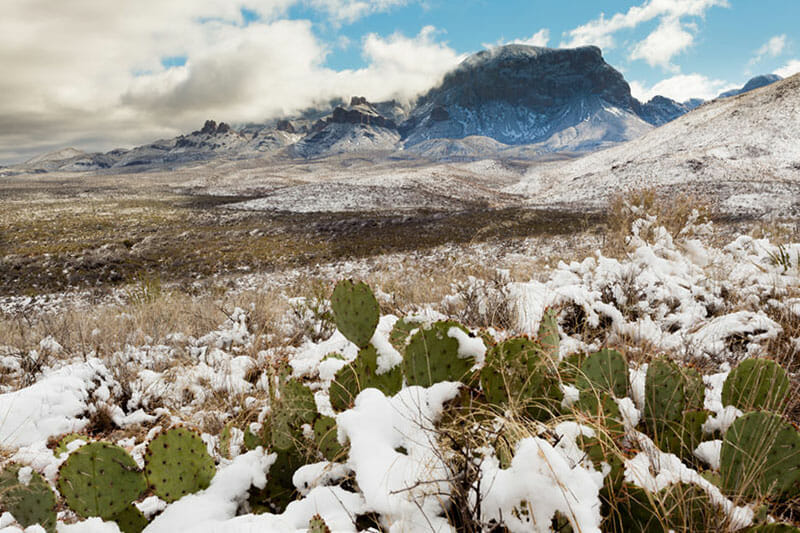 Cacti under the snow in a desert with a mountain background